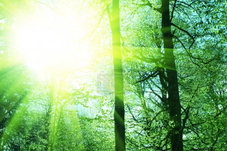 Photo pour Dans la forêt - image libre de droit