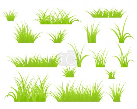 Illustration for Fragment of a green grass. Vector illustration, isolated on a white. - Royalty Free Image