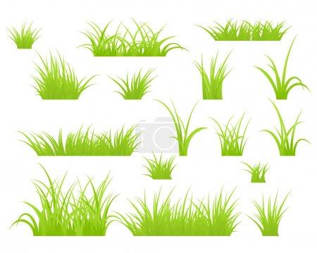 Gras isoliert