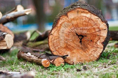 Photo pour Un aliment de base de la biomasse, du bois de chauffage arrangé. - image libre de droit