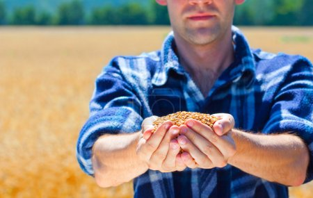 Happy farmer holding ripe wheat corns