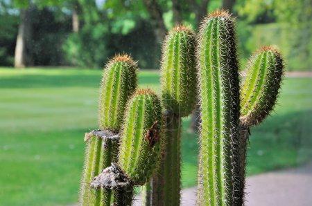 Cactus greenhouse