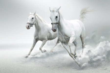Photo for Photo of white horses in motion - Royalty Free Image