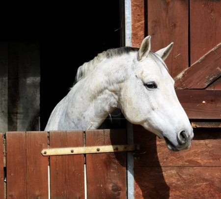cheval dans l'écurie