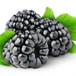 Blackberries isolated on white...