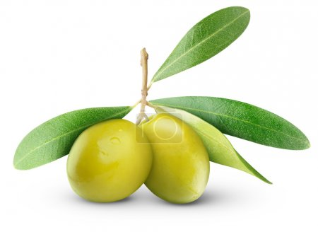 Two green olives on branch with leaves isolated on...