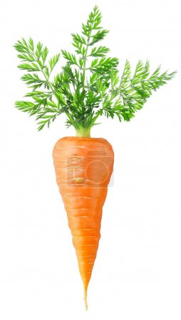 Photo for Carrot isolated on white - Royalty Free Image