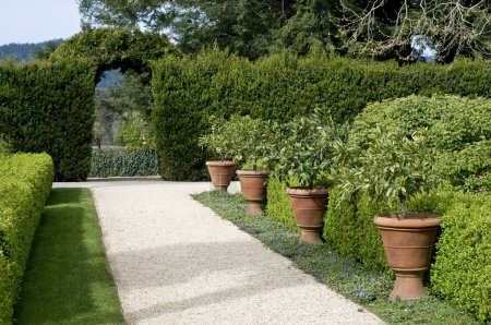 Photo for Gravel garden walkway lined with potted plants, hedge with archway in the background, springtime - Royalty Free Image
