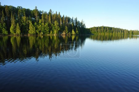 Photo for Reflections on the Coniferous Forest on a Wilderness Lake - Royalty Free Image