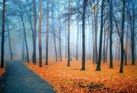 Photo pour Brouillard bleu de fées dans une forêt - image libre de droit