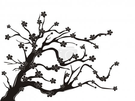 Illustration for The silhouette of cherry blossom tree on white background - Royalty Free Image