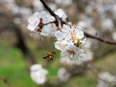 Bee gathering nectar in a garden