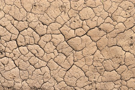 Photo for Dry and cracked earth background - Royalty Free Image