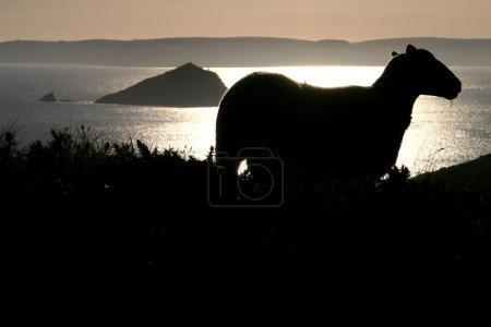 Photo pour Une tempête estivale s'abat sur la mer, le soleil se couche sur la grande pierre de Mew, jambons du sud Devon, tête de rampe dans le mur de maïs en arrière-plan - image libre de droit