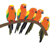 Bright Sun Conure Parrots On White