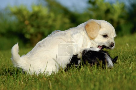 Puppies are fighting and playing