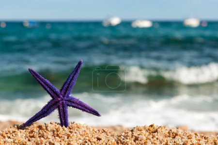 Purple starfish at the beach
