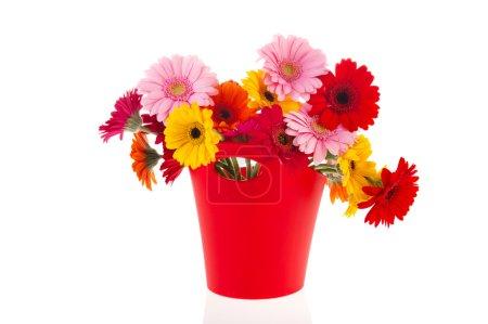 Photo pour Vase rouge moderne avec des fleurs Gerber colorées isolées sur fond blanc - image libre de droit