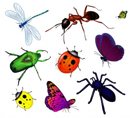 Illustration for Set the image of vector insects - Royalty Free Image