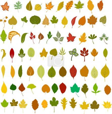 Illustration pour Illustration des feuilles vectorielles - image libre de droit