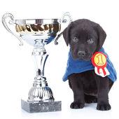 Little champion