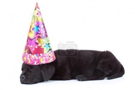 Party dog sleeping