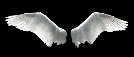 Foto de Angel wings isolated on the black background. - Imagen libre de derechos