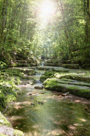 Photo pour Soleil brille à travers les arbres dans la nature préserver dans le Kentucky central - image libre de droit