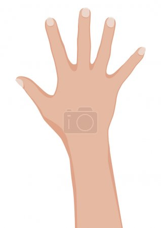 Illustration for Woman hand. Vector illustration on white background. - Royalty Free Image