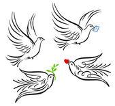 Dove pigeon