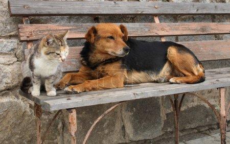 Katze und Hund sind Freunde