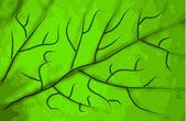 Zelená listová texturu