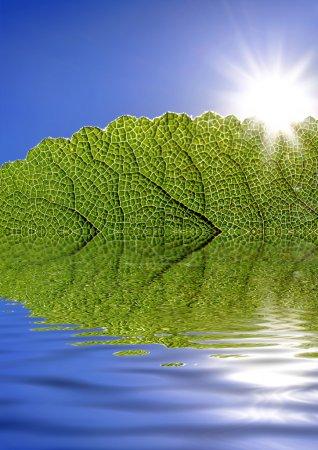 Photo pour Feuille verte contre le ciel bleu et le soleil reflété dans l'eau - image libre de droit