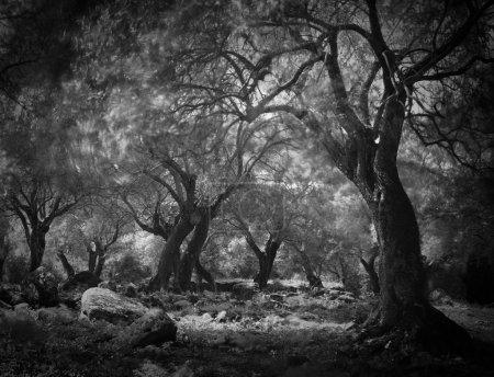 Photo pour Forêt de mystérieux fantôme sombre, leafs de longue exposition mène à floue. Spooky woods effrayants fantastique arbres de haloween fairytale horreur - image libre de droit