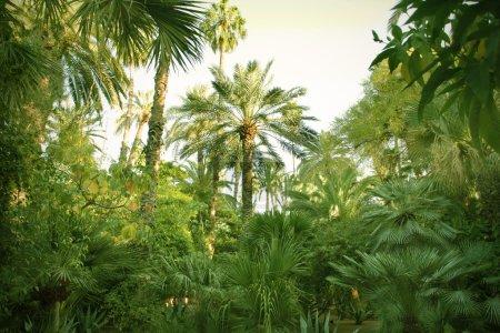 Photo pour Palmiers dans un jardin - image libre de droit
