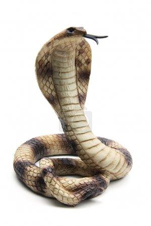 Rubber Cobra on White Background...