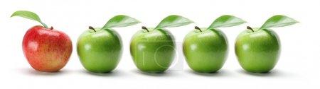 Photo pour Rangée de pommes sur fond blanc - image libre de droit