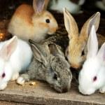 Sweet small bunny rabbits family...