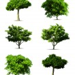 Set 3d tree pack. Vector on white background