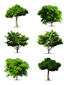 Set 3d tree pack Vector on white background