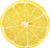 Lemon slice macro perfect for background Vector
