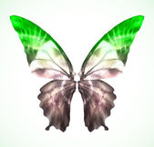 Vibrant green Butterfly Isolated Vector