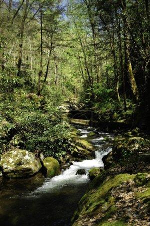 Photo pour Un ruisseau qui serpente lentement à travers la forêt au printemps - image libre de droit