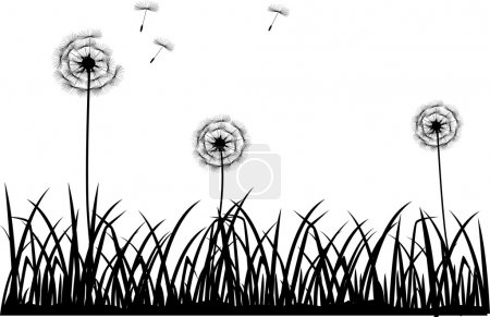 Illustration for Vector illustration of dandelion silhouette - Royalty Free Image
