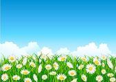 Flower field background