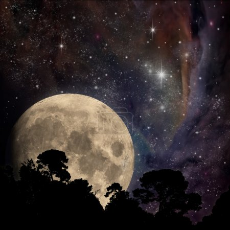 Photo for A Night Sky with Moon and Trees - Royalty Free Image