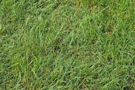 Photo pour Herbe verte fraîche dans la journée ensoleillée - image libre de droit