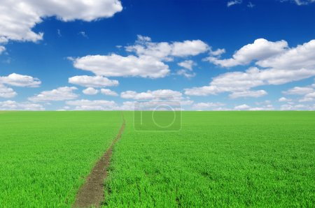 Photo for Pathway on field - Royalty Free Image