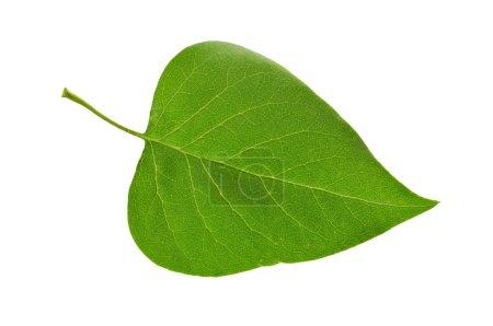 Photo pour Feuille d'une plante gros plan - image libre de droit