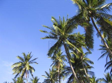 Green palm trees overhead tropical beach